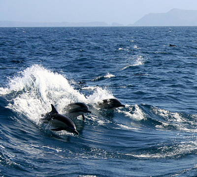 Photograph - Three Dolphins by Michael Cervin