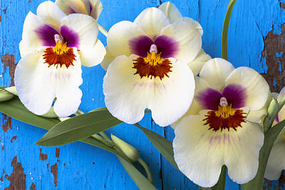 Chip Photograph - Three Exotic Orchids by Garry Gay