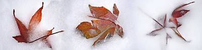 Fallen Leaf Photograph - Three Fall Leaves In Snow by Panoramic Images