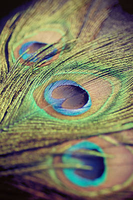 Photograph - Three Feathers by Nastasia Cook