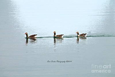 Three Geese A Swimmin Art Print by Eric Curtin