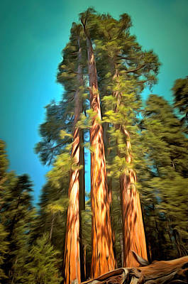 Sequoia Painting - Three Giant Sequoias Digital by Barbara Snyder
