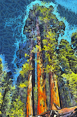 Photograph - Three Giants Of The Forest Abstract by Barbara Snyder