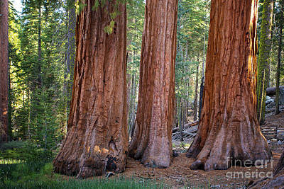 Three Graces Yosemite Art Print by Jane Rix