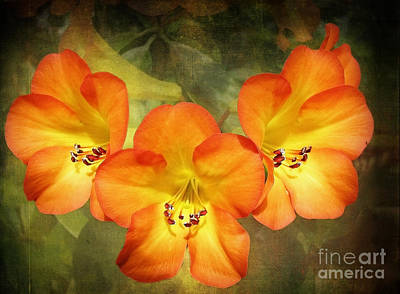 Photograph - Three Hawaiian Beauties by Ellen Cotton