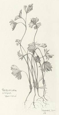 Three Herbs - Parsley Art Print