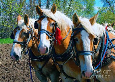 Photograph - Three Horses Break Time  by Tom Jelen