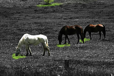 Photograph - Three Horses by David Yocum