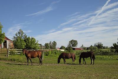 Photograph - Three Horses In New Haven by Ishana Ingerman