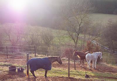 Photograph - Three Horses by Matthias Hauser