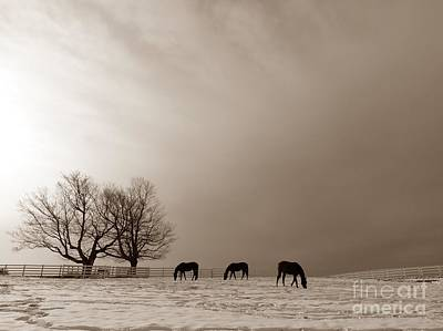 Pineland Farms Photograph - Three Horses On A Hill At Pineland Farm In Maine  by Christine Stack