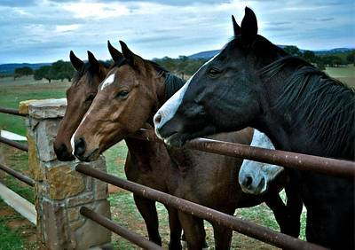 Photograph - Three Horses Waiting For Carrots by Kristina Deane