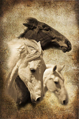 Photograph - Three Horses West by Steve McKinzie