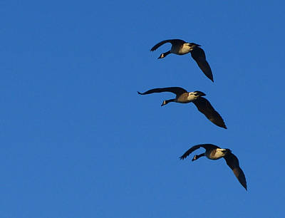 Photograph - Three In The Evening Sky by Ronda Broatch
