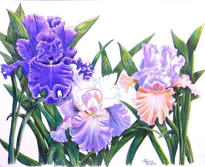 Lavender Drawing - Three Irises by Laura Wilson