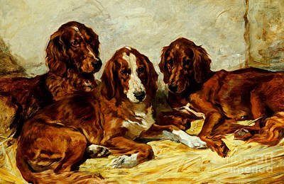 Irish Painting - Three Irish Red Setters by John Emms