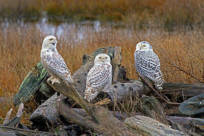 Photograph - Three Is A Crowd by Shari Sommerfeld