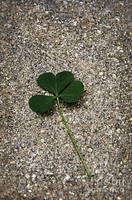 Three Leaf Clover Art Print