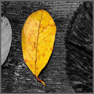 Three Leaves On Wood Texture Original by Tommytechno Sweden