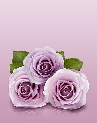 Three Lilac Roses Art Print