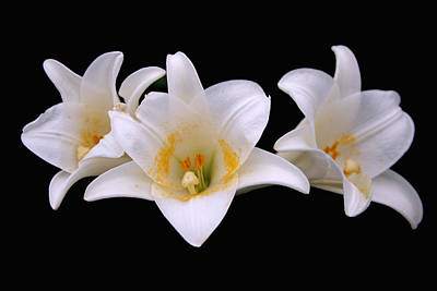 Art Print featuring the photograph Three Lilies by Andy Lawless