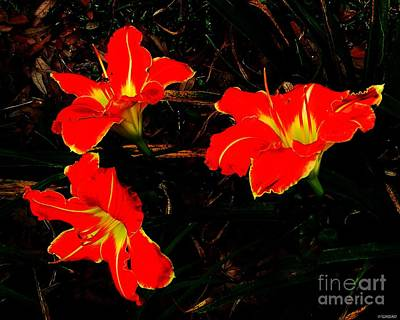 Photograph - Three Lilies by Lizi Beard-Ward