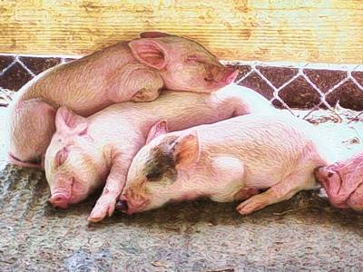 Digital Art - Three Little Piglets - Horizontal by Lyn Voytershark