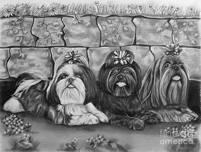 Pup Drawing - Three Little Shih Tzus by Lena Auxier