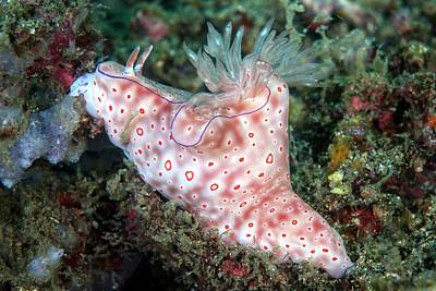 Three-lobed T-bar Nudibranch Print by Ethan Daniels