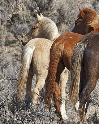 Forelock Photograph - Three Long Tails W1291  by Wes and Dotty Weber