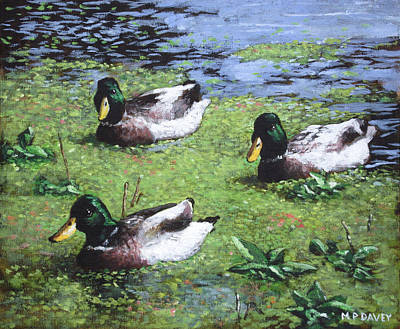 Painting - Three Mallard Ducks In Pond by Martin Davey