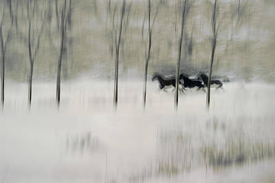 Running Horses Photograph - Three by Milan Malovrh
