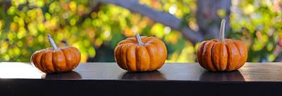 Photograph - Three Minuture Pumpkins by Michael Hope