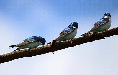 Photograph - Three Tree Swallows by Crystal Wightman