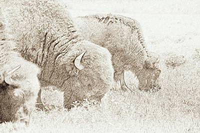 Oklahoma Drawing - Three Of A Kind by Mickey Harkins