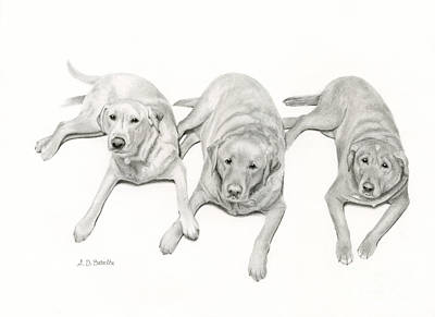 Greetings Card Drawing - Three Of A Kind by Sarah Batalka