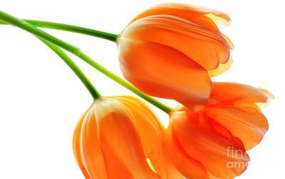 Photograph - Three Orange Tulip Flowers 3 by Charline Xia