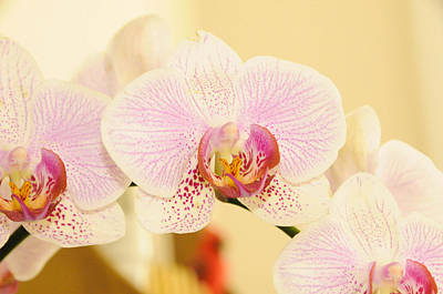 Photograph - Three Orchids by Colleen Keller Breuning