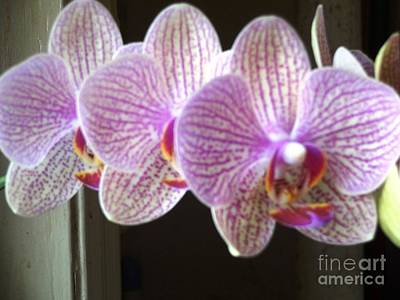Photograph - Three Orchids by Rod Ismay