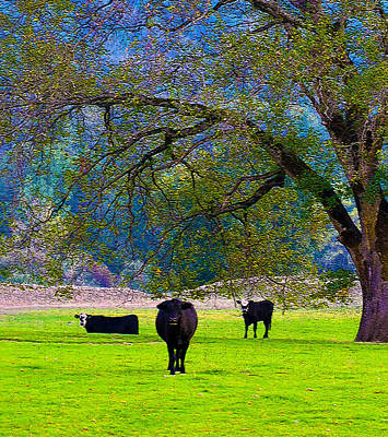 Photograph - Three Oregon Cows by Michele Avanti