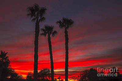 Photograph - Three Palm Sunset by Robert Bales