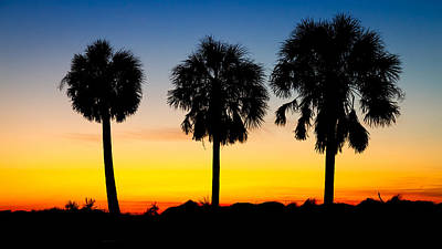 Photograph - Three Palm Trees At Sunset by Pierre Leclerc Photography