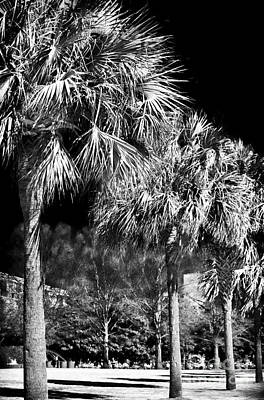 Three Palms In Charleston Art Print by John Rizzuto