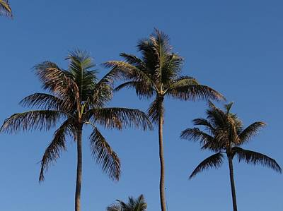 Photograph - Three Palms by Keith Stokes