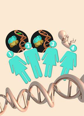 Infographic Photograph - Three Parent Ivf by Victor Habbick Visions