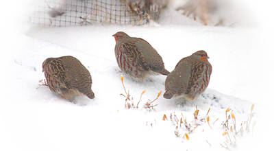Photograph - Three Partridges Vignette by Donna Munro