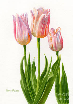 Three Peach Colored Tulips Original by Sharon Freeman