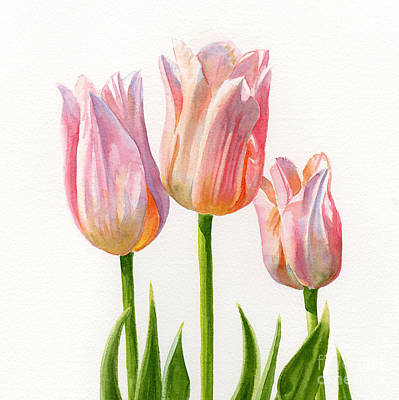 Three Peach Colored Tulips Square Design Art Print by Sharon Freeman