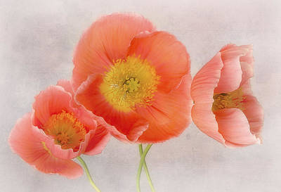 Photograph - Three Peach Poppies by David and Carol Kelly