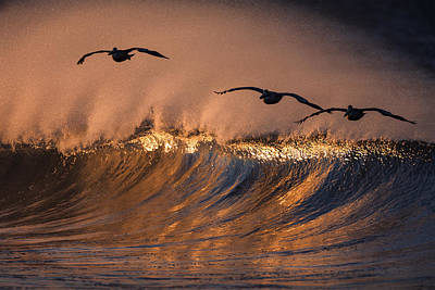 Photograph - Three Pelicans 73a2301 by David Orias